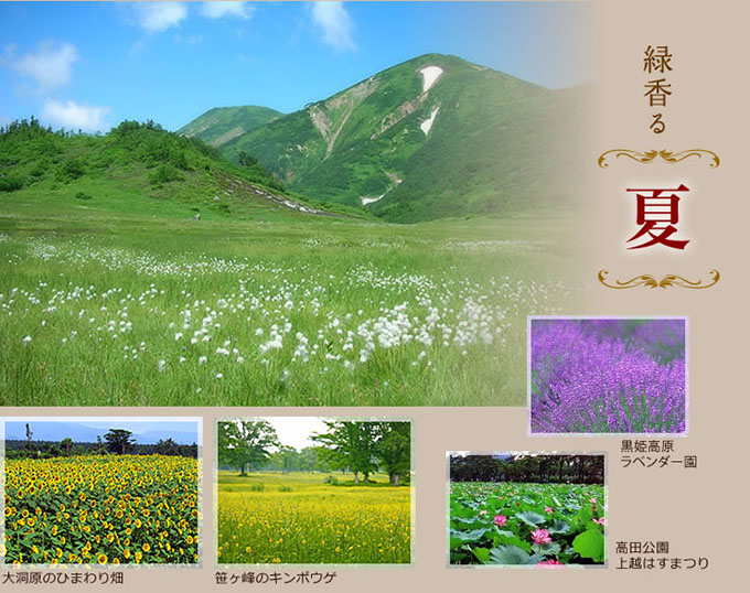 緑香る夏、妙高山山頂、笹ヶ峰のキンポウゲ、大洞原のひまわり畑、高田公園、上越はすまつり、黒姫高原ラベンダー園